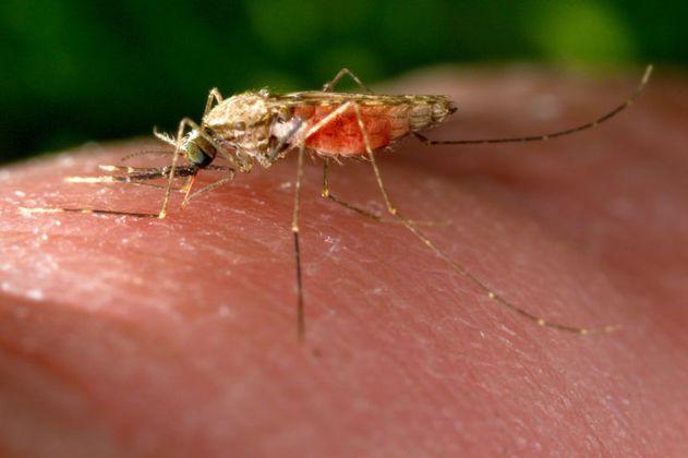 Así están conectados el cambio climático y la transmisión de la malaria