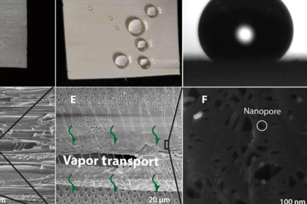Científicos logran desalinizar agua usando madera