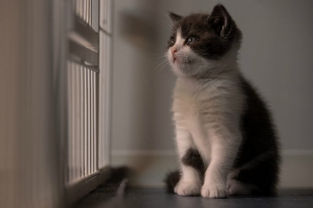 China consigue clonar a su primer gato