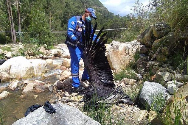 Encuentran dos cóndores sin vida en zona rural de Santander