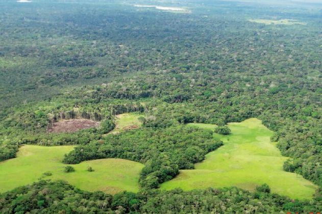 De enero a agosto, la deforestación de la Amazonia brasileña creció 91%