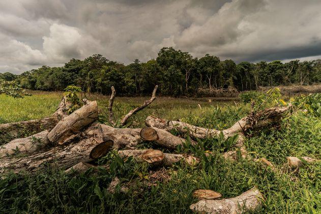 Deforestación en la Amazonía: un problema de democracia ambiental