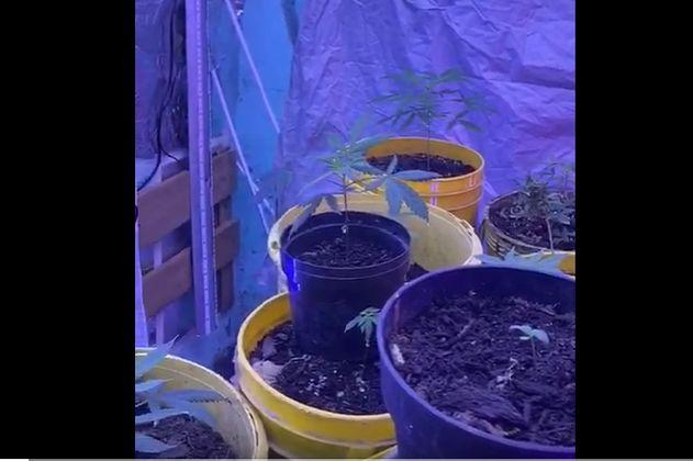 Policía encontró cultivo de marihuana en una vivienda del centro de Bogotá