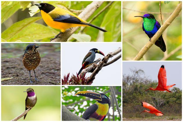 Hoy empieza el festival de aves más antiguo de Colombia