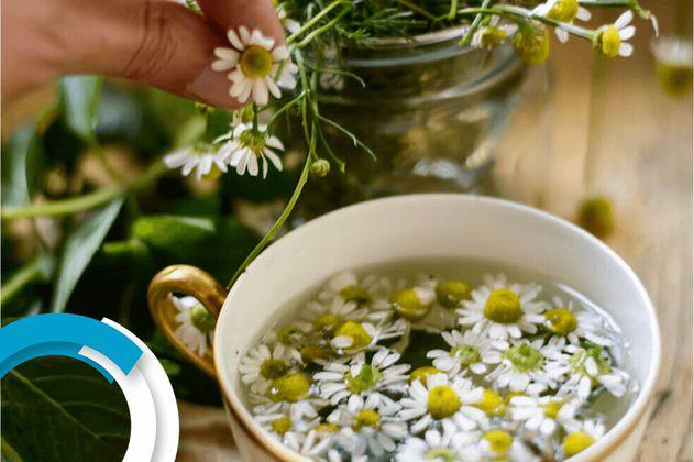 Agua de hierbas: ¿qué tan buenas son para la salud?