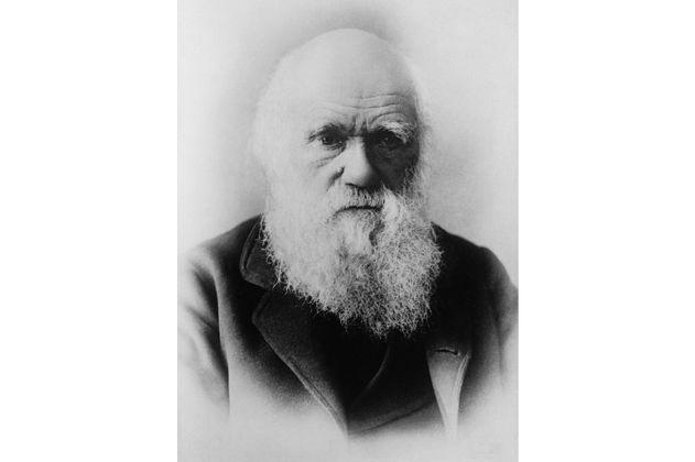 Cambridge busca dos cuadernos de Darwin que se perdieron hace 20 años