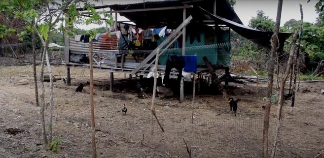 Los awá conservan tradiciones como vivir en casas elevadas, elaboradas en madera. Sin embargo, los espacios para la siembra son cada vez más reducidos y las tierras menos fértiles.