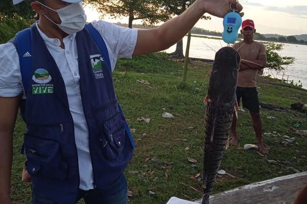 MiPez: monitoreo comunitario de la salud del río Magdalena