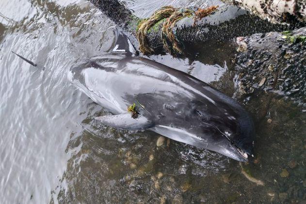 Encuentran delfines muertos cerca del vertido de petróleo en la isla Mauricio