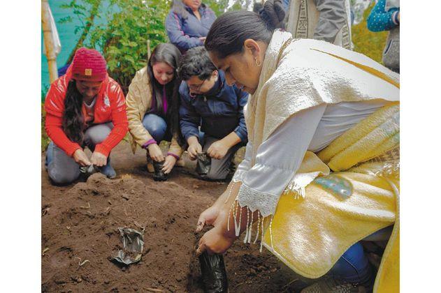 Viveros comunitarios, aliados para restaurar los páramos de Colombia