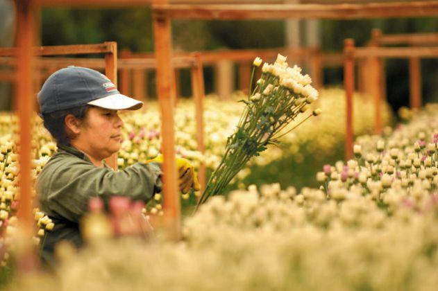 Las dudas de la SAC sobre las cifras de desempleo del DANE en el agro