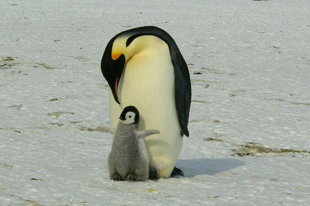 Disminuyen las poblaciones de aves marinas del Ártico por el deshielo del mar
