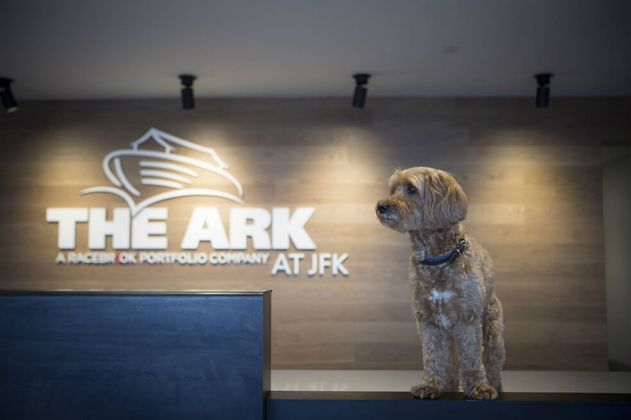 El aeropuerto JFK: un paraíso para los animales que vuelan a Nueva York