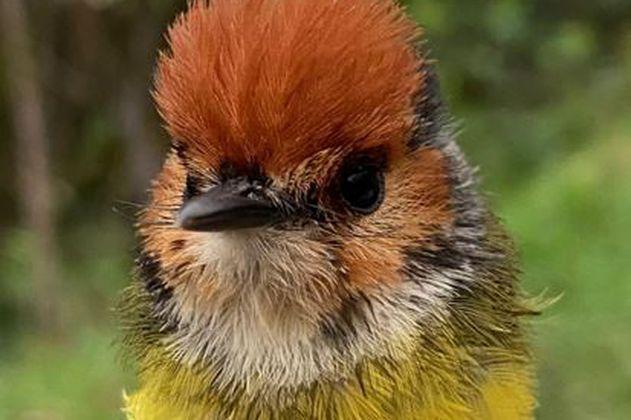 Lanzan primera expedición para conocer el estado de las aves de Colombia
