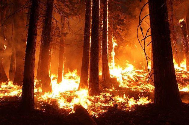 A último debate proyecto de prevención de incendios forestales