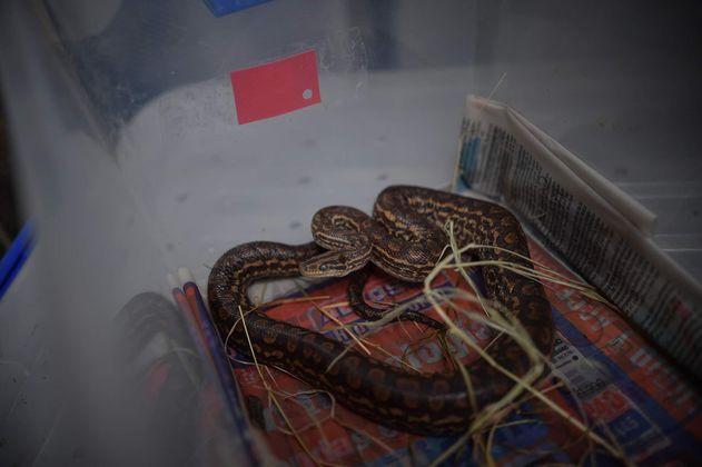 En imágenes: los animales que son atendidos en el Centro de Fauna