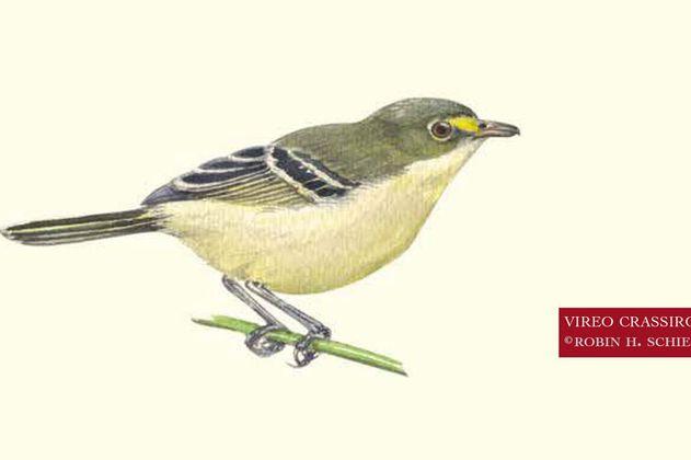El ave endémica que pudo haberse extinguido con el Huracán Iota