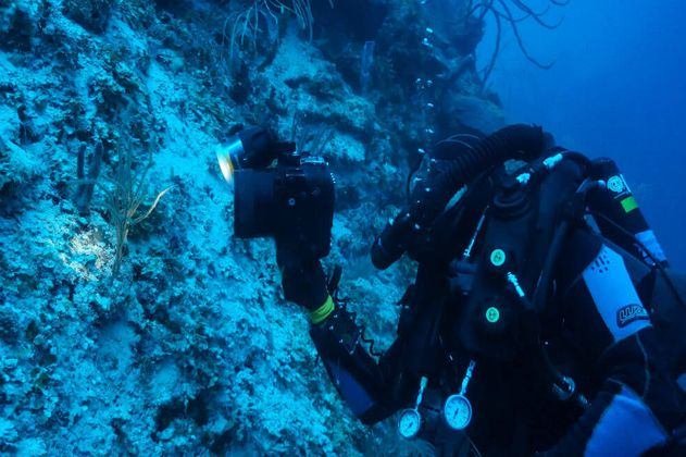 La expedición que exploró los corales del fondo del mar Caribe