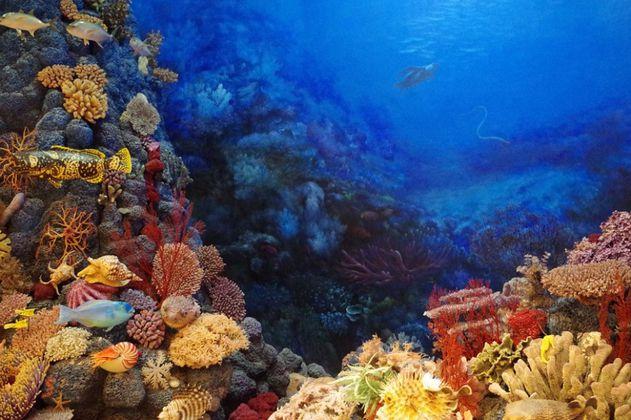 La cobertura mundial de corales se ha reducido a la mitad en los últimos 50 años