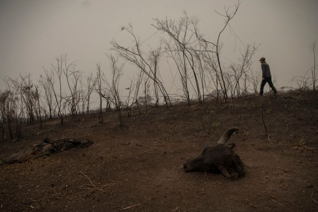 Los incendios en el humedal más grande del mundo alcanzan nivel récord