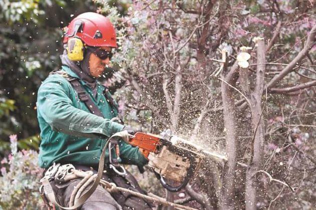 Compensación por árboles talados en Bogotá: un asunto sin claridad