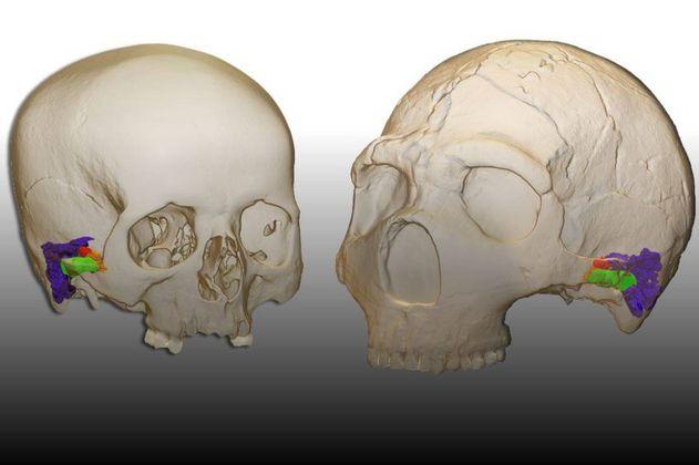 Los neandertales pudieron oír y hablar como nosotros