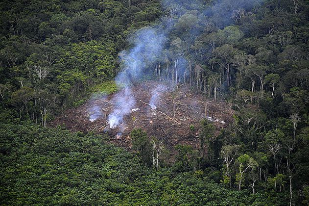 Los incendios forestales están afectando a toda Latinoamérica