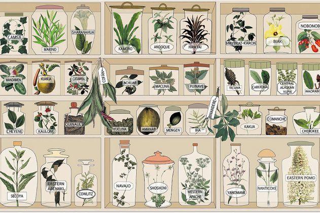 Carrera contra el reloj para salvar el conocimiento sobre plantas medicinales