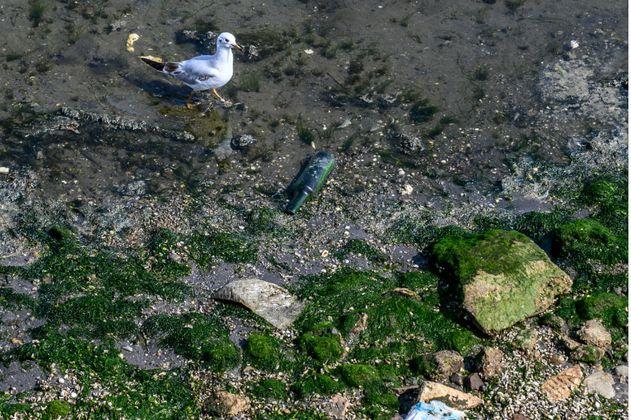 La contaminación amenaza al Mar Caspio