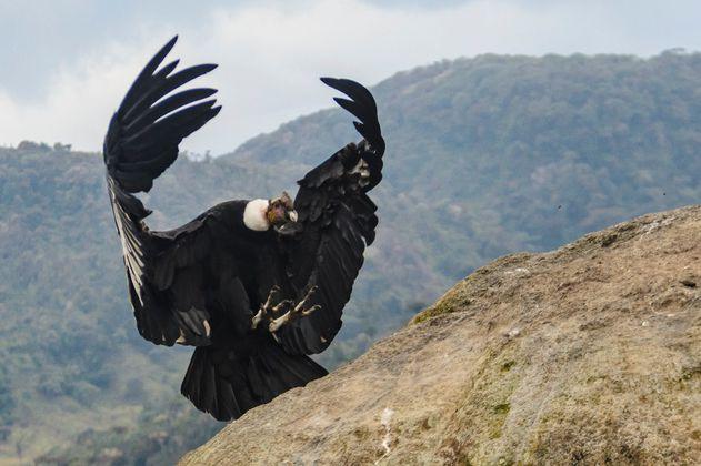 Las aves sufren una extinción milenaria causada por los humanos