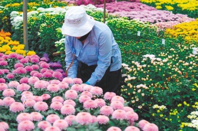 Las flores colombianas buscan su lugar en la reapertura del mundo