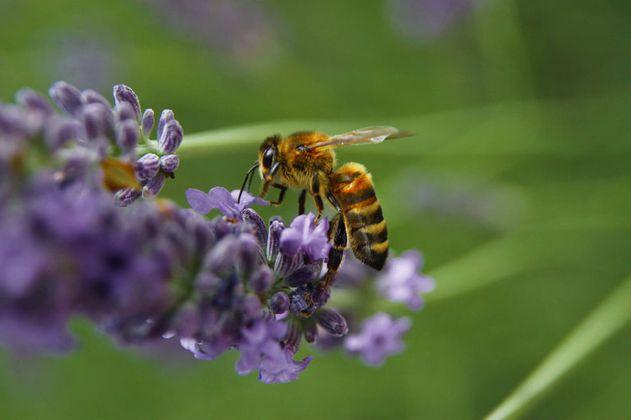 Proyecto de ley sobre conservación de abejas entra en etapa final