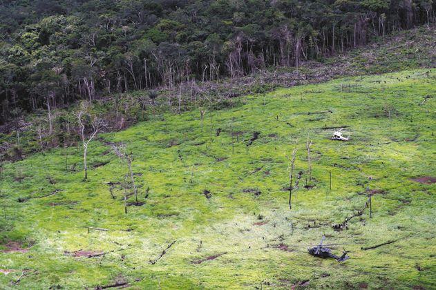 ¿A dónde va a parar la carne de res que causa deforestación en el parque Chiribiquete?