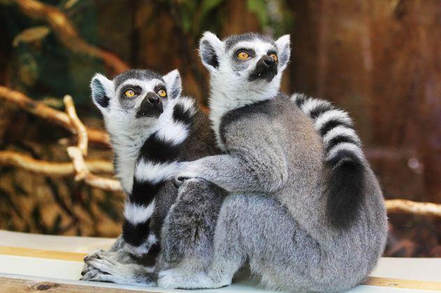 Actividad humana obliga a los animales a moverse más lejos para sobrevivir
