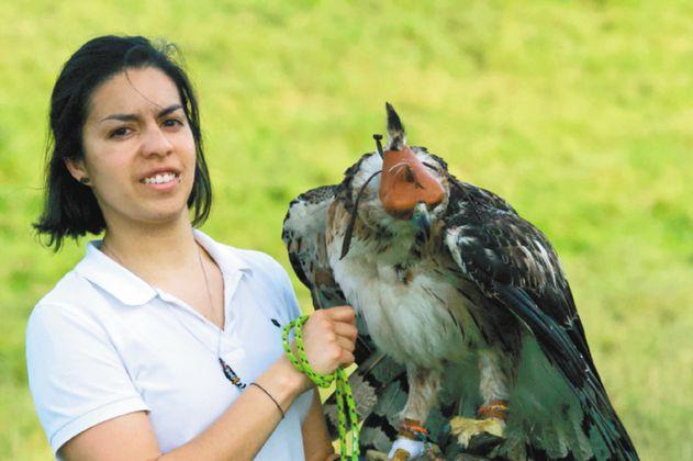 La colombiana que busca proteger al águila real de montaña