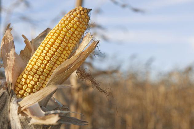 Costos de fertilizantes se traducirán en alimentos más caros