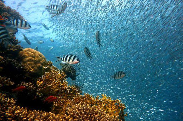 Salvar los arrecifes, lo que podría acercar a Cuba y Estados Unidos