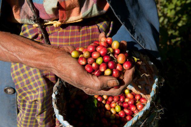 Aprueban Conpes cafetero con inversión mínima de $34.531 millones del PGN