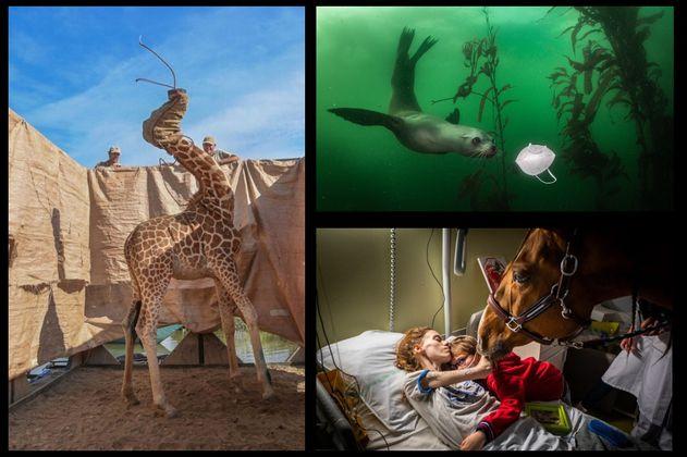 World Press Photo: las mejores fotografías que dejó el año de la pandemia