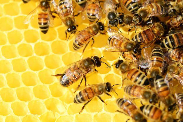 Investigan en Colombia muerte de más de siete millones de abejas