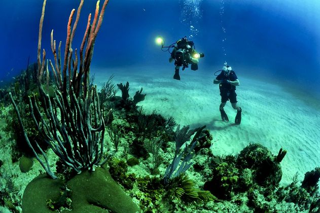 Se buscan expertos para la conservación de corales en Latinoamérica