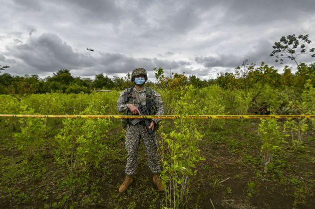 Pese a haber reducido los cultivos ilícitos, Colombia produce más cocaína, ¿por qué?