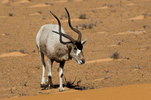 Petrolera china amenaza la mayor reserva natural de África