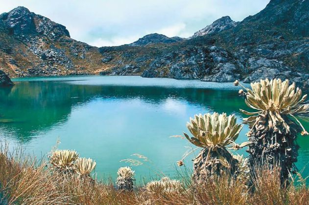 Bavaria invertirá $2.500 millones en la protección del Páramo de Santurbán