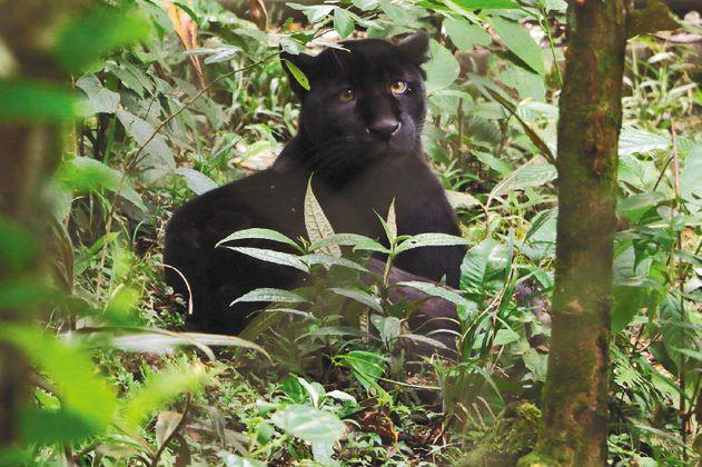 La finca ganadera que transformó la conservación ambiental en el Putumayo