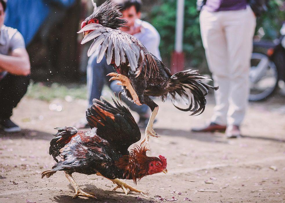 Parte de las medidas implica la no utilización de espuelas u otros elementos que ocasionen daño a los animales.
