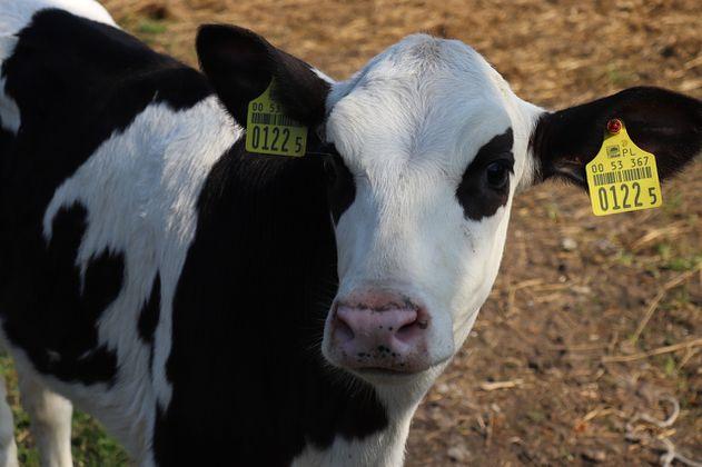¿Comer menos carne para evitar una crisis ambiental? Esto dice la ciencia