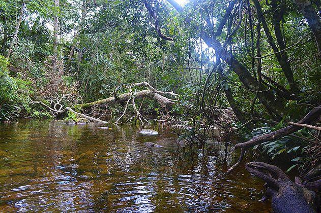 La deforestación en Serranía de La Lindosa afecta diversidad acuática