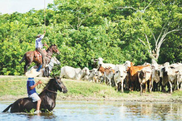¿Cuántos ríos se necesitan para consumir carne y lácteos?