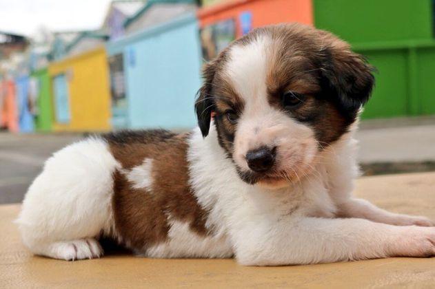 Prográmese para las jornadas de adopción animal en Bogotá, el próximo sábado 14 de diciembre